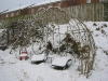 A living willow arbour in the snow