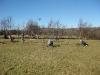 Ysgol Gynradd Cwrtnewydd - Living Willow Play Area - Work begins