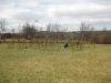 Ysgol Gynradd Cwrtnewydd - Living Willow Play Area - Taking shape