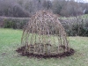 Living willow dome by Living Willow Wales at Ysgol Penlon